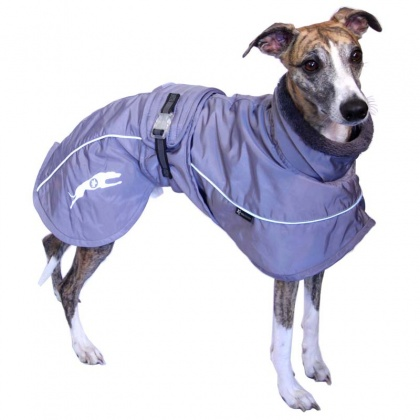 manteau_whippet